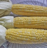 oven roasted corn on the cob recipe